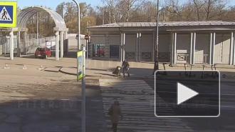 На набережной Мартынова кроссовер сбил женщину-пешехода