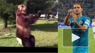 Хамство Широкова повторил дрессированный медведь