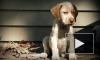 В Петербурге судят мужчину, отрезавшего собаке хвост