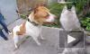 Юрист предложил выписывать штраф до 50 тысяч рублей за выгул опасной собаки без намордника