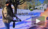 """""""Устал от зимы"""": Американец вышел на борьбу со снегом с огнеметом"""