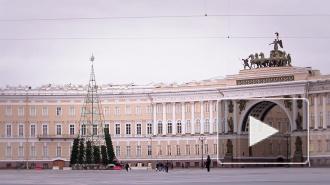 Урбанистичная елка снова изуродовала Дворцовую