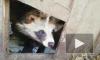 Немного милоты: у енотовидных собак Фрола и Фроси родились первые щенки