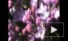 Краски весны-2
