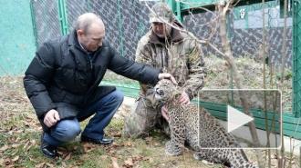 Президент Путин пообщался с леопардом лицом к лицу
