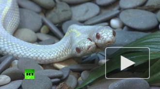 В Москве показали двухголовую змею-альбиноса