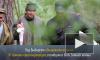 Поисковики обнаружили под Выборгом захоронение 97 красноармейцев погибших на Зимней войне