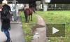 Видео: в троллейбус на Ленинском проспекте не пустили лошадь