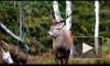 Мощная молния убила более 300 оленей на юге Норвегии