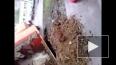 Жители Екатеринбурга сняли на видео КамАЗ, который ...