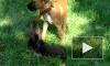 В Петербурге ссора из-за собак привела к поножовщине со смертельным исходом