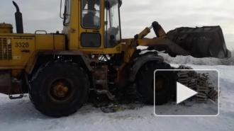 Более тонны польских груш раздавили бульдозером в Петербурге