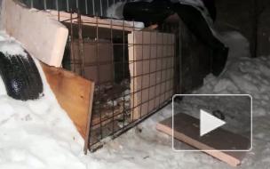 Обглоданные черепа собак шокировали жителей Комендантского