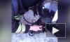 Видео: российские пожарные сделали искусственное дыхание котикам