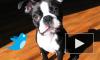 Британский программист кормит пса с помощью Twitter