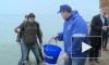 В акваторию Финского залива выпустили 5000 мальков сига