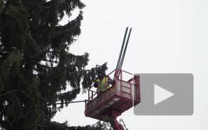 Без комментариев: как распушают елку на Дворцовой площади