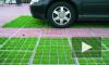В Петербурге парковка на газонах обойдется в полмиллиона
