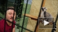 В мире животных: Дорн и Орейро