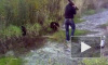 В интернет попало видео: пьяный мужчина убил трубой медвежонка в Югре, полиция ищет злоумышленника