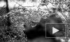 И снова стрельба: на Малоохтинском открыли огонь по золотистой иномарке