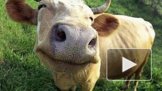 Возвращение молока: снят запрет на поставку молочной продукции из Литвы