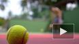 Теннисистка Мария Шарапова завершила карьеру