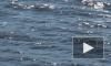 В водах Финского залива стреляют водолазы