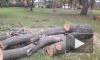 В Заневском парке вырубают деревья