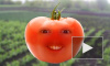 Бодрая грядка: овощи о ЧП на ЛАЭС, космонавтах и Голливуде