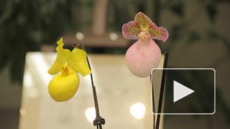 В Ботаническом саду массово цветут азалии, а также проходит выставка орхидей