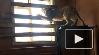 Полицейские сняли на видео львят, которых нашли в промзоне Бирюлево