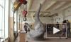 Двухсоткилограммовый слон спустился с окна на подъемном кране