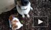 Кот Федор сбежал из музея ради спасения друга-щенка
