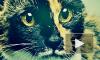 Кошки vs кошконенавистники: победили пушистые