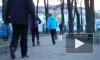 Собака Юрия Гальцева погибла в результате массовой травли в Никольском сквере