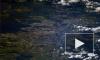 Космический Петербург: город на Неве сфотографировали с МКС