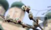 """В """"Вербное воскресенье"""" в Петербурге пустят дополнительные автобусы"""