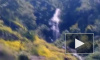 Очевидцы засняли гигантское чудище, блуждающее в лесах Индонезии