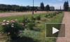 В Московском парке Победы и на Марсовом поле распустились пионы