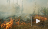 В Сибири лесных пожаров стало еще больше
