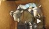 В Пулково мимимишных енотов грузили целыми коробками