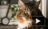 В Петербурге кошке прострелили глаз, в США кота выдвинули в сенат