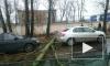 На Салова в Петербурге дерево рухнуло на автомобиль
