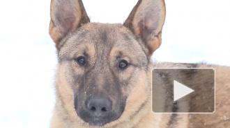 Собаке-улыбаке, ставшей звездой Интернета, ищут дом