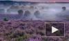 HBO снимет сериал про древнегреческую колдунью Цирцею