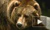 Таджикские пограничники и киргизские браконьеры устроили стрельбу из-за мертвого медведя