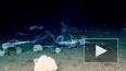 Видео: на глубине 450 метров стая маленьких акул съела р...