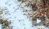"""""""То ли снег, то ли дождь"""": Москву завалило снежным дождем и градом"""
