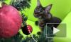 Новогоднее видео из Ярославля: Животные из зоопарка украсили елку